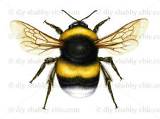 Furniture Decal Image Transfer Vintage Bumble Bee Insect Wings Label diy Sting