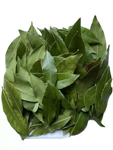 Organic Bay Leaves 100+ Freshly Picked, Vacuum Sealed And Shipped To Order