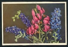 Dated 1957. View of Turk's Cap & Larkspur Flowers