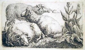 Radierung, Schafe, Carl v. Vittinghoff, 1807, Lugt 982b