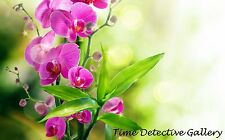 Orchids (5) - Giclee Photo Print