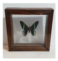 Vintage Wooden Framed Green Banded Urania Leilus Day Moth