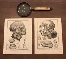 Diderot's Enclyclopedie - ANATOMIE, ARTERES DE LA FACE - c1750 fig. 1 & 2