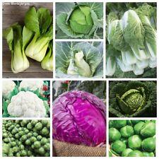 80 Kale Vegetable Seeds Cabbage 15 Kinds Organic Biennial Garden Plants non-GMO