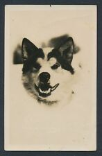 1920's Alaskan Husky Real Photo Postcard