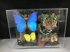 Beautiful Vintage Real Butterfly Taxidermy Lucite Display