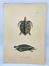 Original Antique Lacepede 1832 Hand Colored Plate 2 Sea Turtles