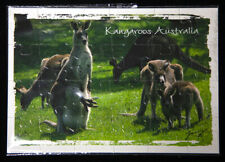 Kangaroo Jigsaw Postcard,  Great Price