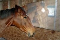 HORSE STABLE MIRROR ON A ROLL SELF ADHESIVE FLEXIBLE & INSTANT-FIT 1500x600mm