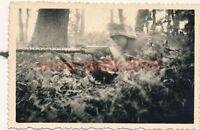12 x Foto, Soldaten bei der Ausbildung im Gelände, Geländedienst (N)1609