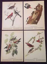 1942 Vintage AUDUBON LOT #1 of 4 RED BIRDS INSTANT DECOR Art Print Lithographs