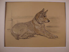 1936 LUCY DAWSON Vintage Colour Print German Shepherd Matted Ready to Frame