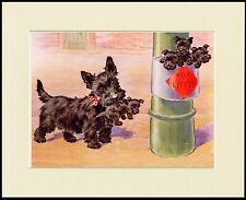 SCOTTISH TERRIER SCOTTIE DOG CUTE LITTLE DOG PRINT MOUNTED READY TO FRAME