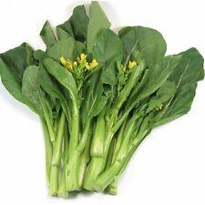 1500 Seeds of Broccoli KALE Chinese / Kailaan Kichi / Kai - lan /PLANT Oriental