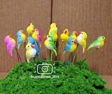10 pcs Miniature Parrot Bird~Animal Figure Fairy Garden Ornament Home Decor