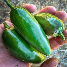 Certified Organic Jalapeño Chili Pepper Seeds (~40): Non-GMO Heirloom Seed