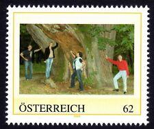 PM mit einem Kastanienbaum mit 10 Meter Stammumfang im mittleren Burgenland