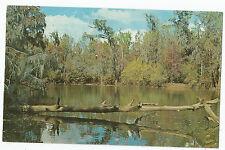 Vintage Postcard Troup Spring Lake Georgia Dublin