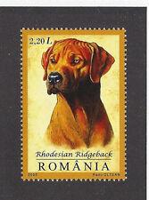 Dog Art Head Study Portrait Postage Stamp RHODESIAN RIDGEBACK Romania 2005 MNH