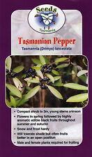 Tasmannia lanceolata Tasmanian Native Pepper - 20 seeds
