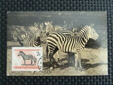 UNGARN MK 1961 ZEBRA MAXIMUMKARTE CARTE MAXIMUM CARD MC CM c1187