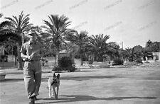 Messina - 1943-Sicilia-ITALIA-Luftwaffe - Wehrmacht-cani leader - 2