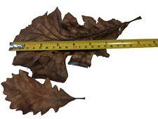 New listing Oak Leaf Litter for Isopods, Amphibians, Reptiles (1 Gallon) - Heat Sterilized