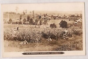 VINTAGE POSTCARD RPPC ON A PINEAPPLE PLANTATION, AUSTRALIA 1900s