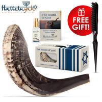 "Shofar From Israel - Kosher Shofar Set: 10""- 12"" Ram Horn - Authentic Curved"