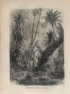 1870 Virgin Forest In Car Nicobar Islands Indian Ocean Original Antique Print