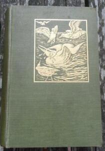 The Romance of Bird Life JOHN LEA  Seeley & co 1909 illustrated antiquarian book