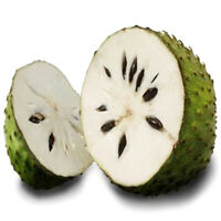 20pcs seeds soursop Durian Tropical Fruit garden Bonsai Pd TS!HS8