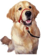 Colliers lumineux noirs en nylon pour chien