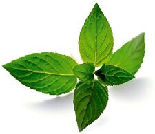 15ml Peppermint Essential Oil, Aromatherapy