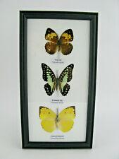 3 echte exotische Schmetterlinge im Schaukasten auf Watte Bilderrahmen -  27