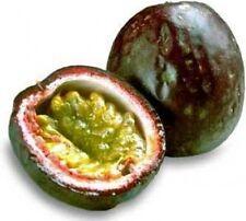 Passiflora Tom's Special Good Fruit 10 seeds