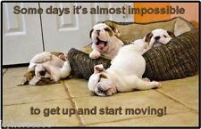 Funny Dog Humor Some Days It's Almost Impossible Refrigerator Magnet