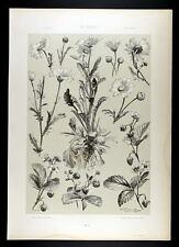1886 seder-art nouveau-strawberry & Daisy-FRAISE & Marguerites II