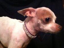 "Small Purple Collar With Crystal Rhinestone Dog Collar Fits 9-12"" Necks"