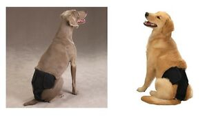 MALE PUP PANTS - Washable Cotton Reusable Cloth Diapers for Dogs CLOSEOUT
