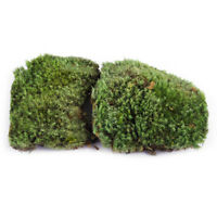 2X 10*8CM Miniatur Natur Trockenes Echte Dekomoos Garten Basteln Mikrolandschaft