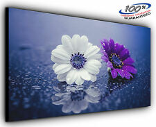 Two Wet Flower Panoramic Canvas Print Modern Art 4 Sizes to Choose Ready to Hang