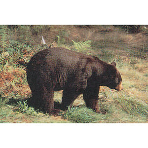 "Delta Large Game Paper Target, Black Bear, 28"" x 42"""