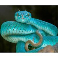 Diamond Painting 5D DIY Full Drill Snake Cross Stitch Kits Home Decor Art Gift