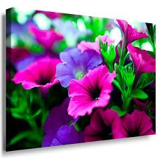 Pitunien grün violet lila Blume schönheit Leinwandbild Bild Wandbild Juliaart!!!