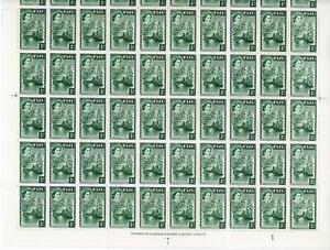 Fiji 1954 1/2d Myrtle-green Complete Sheet of 60 MNH SG 250 Cat £60+