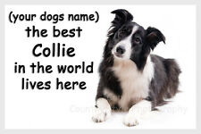 Border Collie Sheepdog Fridge Magnet personalised dogs name Gift