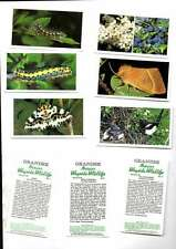 GRANDEE,BRITAINS WAYSIDE WILDLIFE,FULL SET 30 CARDS PLAYERS 1988 ISSUE MINT