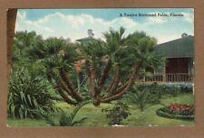 A Twelve Stemmed Palm,Florida, used 1915 from Altamonte Springs,Fla. FL