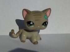petshop  chat europeen European cat pet shop cat   LPS # 483